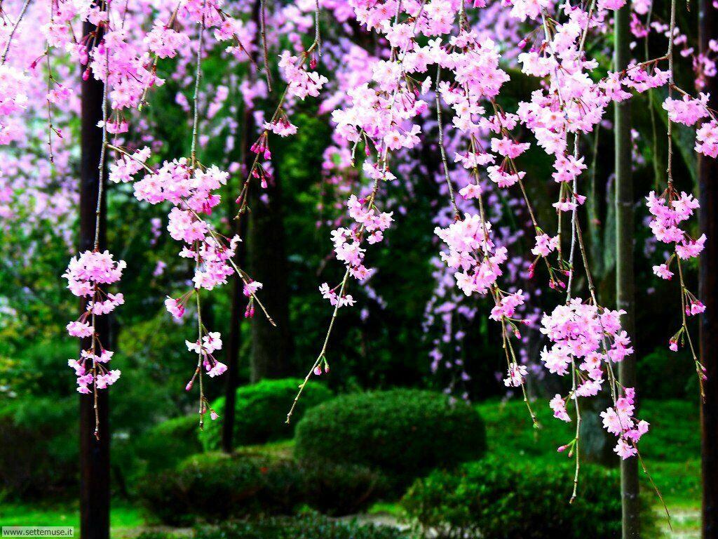 stagione_primavera_068